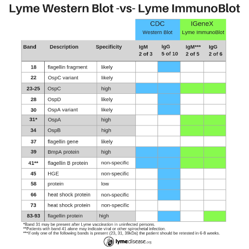 Another LOOK at LYME Testing